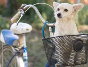 dog carrier for bike