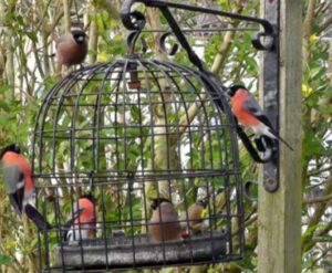dove proof bird feeders