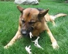 duck feet for dogs