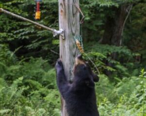 pole mounted bird feeders
