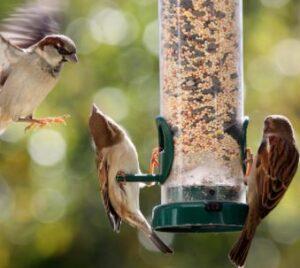 sparrow proof bird feeder