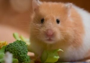what do hamsters like to eat